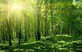敬人纸语系列纸包之森林